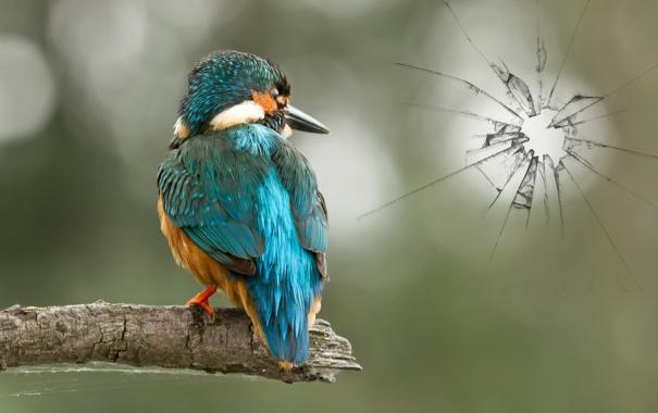 Фото обои стекло, природа, птица