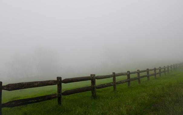 Фото обои трава, деревья, природа, туман, фото, обои, пейзажи
