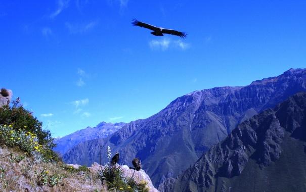 Фото обои горы, вершины, кондоры