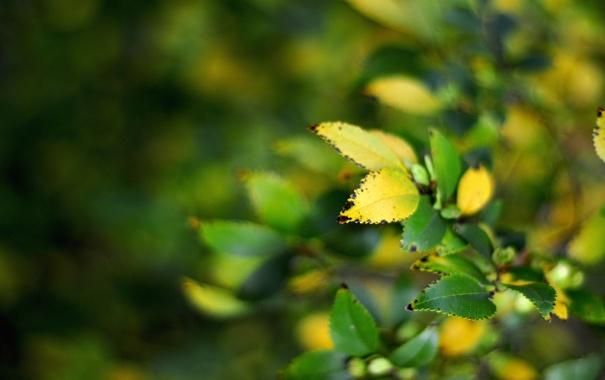 Фото обои листья, ветки, purity of the soul