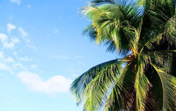 Фото обои лето, пальма, summer