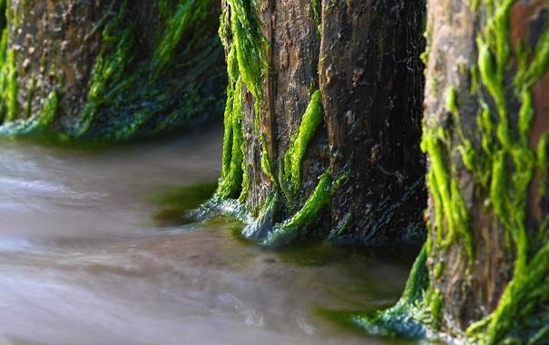 Фото обои мох, вода, дерево