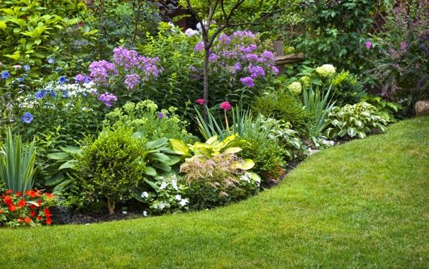 Фото обои цветы, природа, клумба