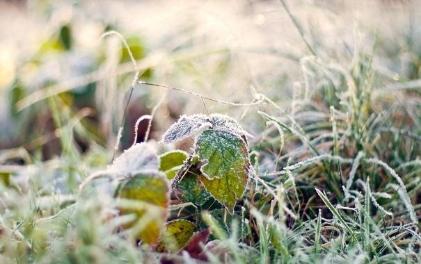 Фото обои иней, трава, макро