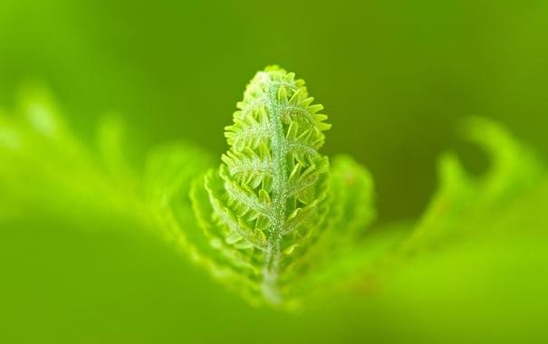 Фото обои зелень, жизнь, A Green World