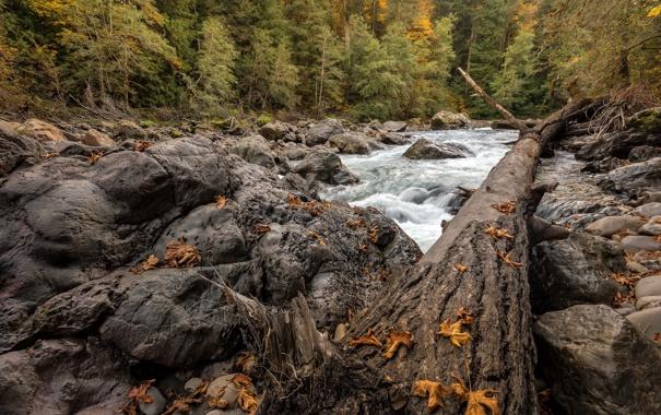 Фото обои осень, река, дерево