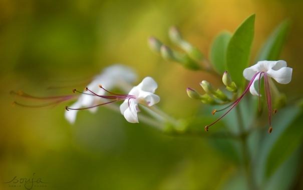 Фото обои лето, цветы, красота