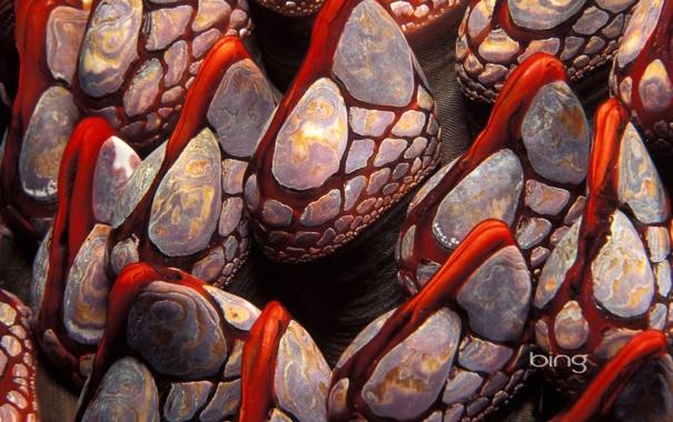Фото обои моллюск, раковина, Канада, ракушки, Британская Колумбия
