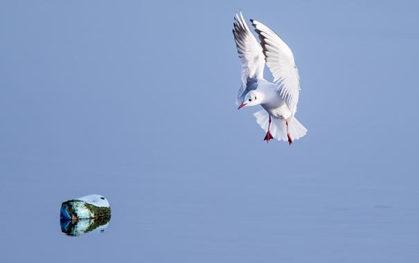 Фото обои крылья, чайка, вода, камень