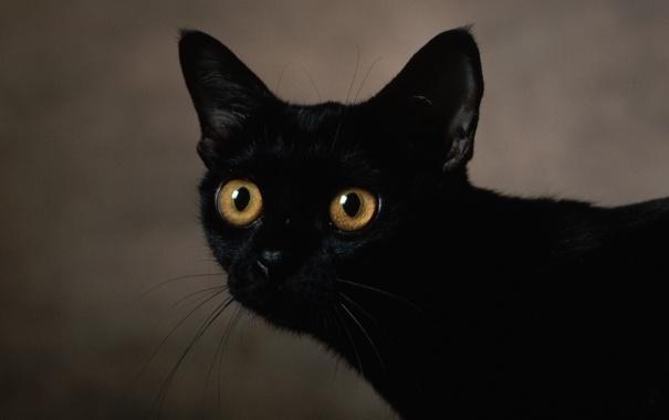 Фото обои фон, глаза, чёрного, цвета