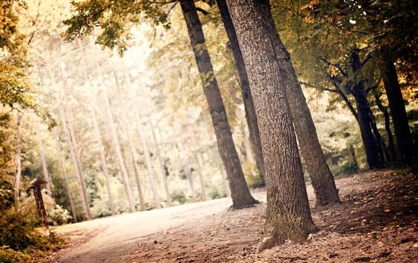 Фото обои зелень, лес, листья, свет, деревья, пейзаж, природа