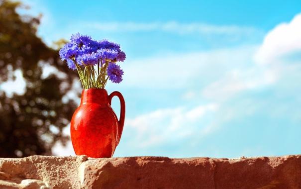 Фото обои небо, цветы, ваза