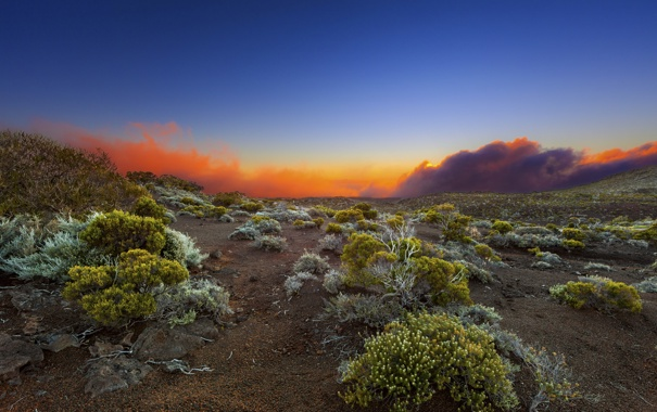 Фото обои поле, пейзаж, закат, природа