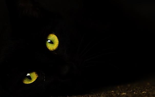 Фото обои глаза, взгляд, кошак, котяра