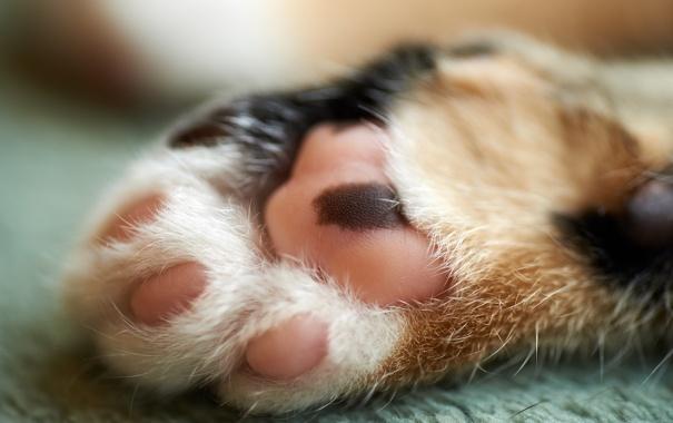 Фото обои кошка, макро, лапа, пол, лапка