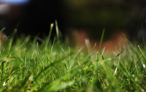 Фото обои трава, макро, природа, фокус, grass, nature, macro