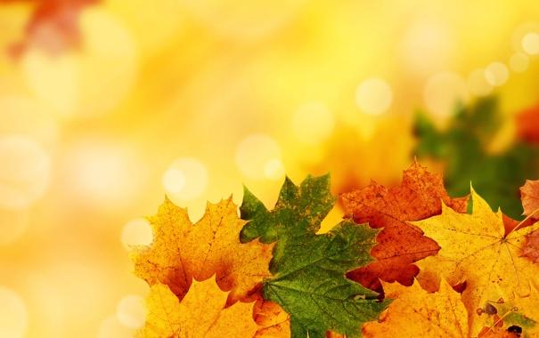 Фото обои осень, листья, прожилки, яркость