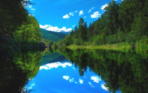 Фото обои лес, лето, река, Природа