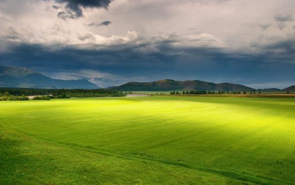 Фото обои поле, трава, обои, пейзажи, поля