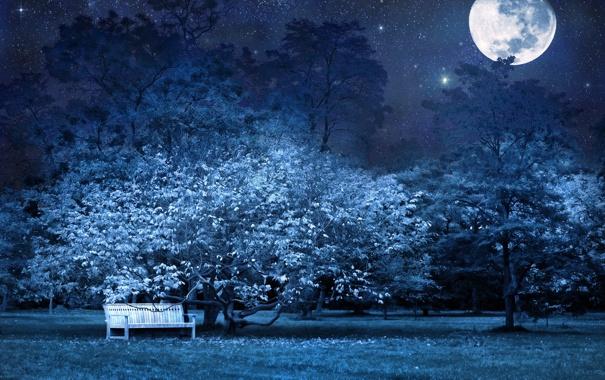 Фото обои звезды, деревья, скамейка, ночь, природа, луна, лавочка