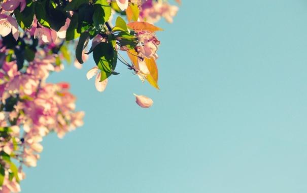 Фото обои небо, фото, лепестки, листья, обои, природа, картинка