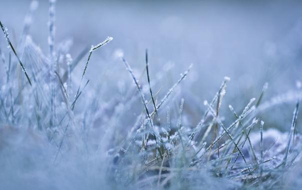 Фото обои трава, растения, природа, мороз, иней, зима, снег