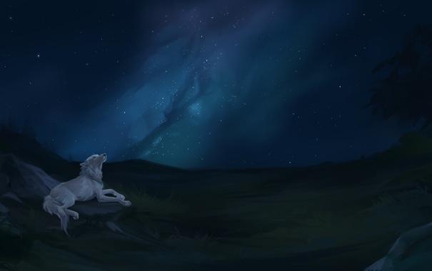 Фото обои природа, волк, звёзды, млечный путь