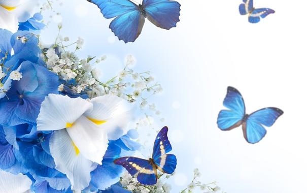 Фото обои бабочки, цветы, white, blue, blossom, flowers, butterflies