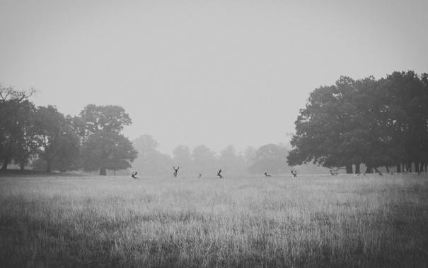Фото обои поле, деревья, туман, олень