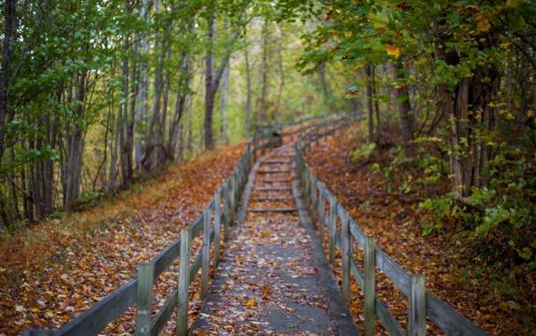 Фото обои осень, лес, листья, деревья, парк, путь
