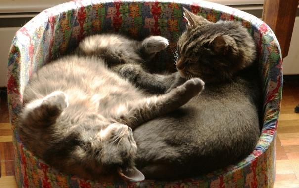 Фото обои кошка, котенок, спят