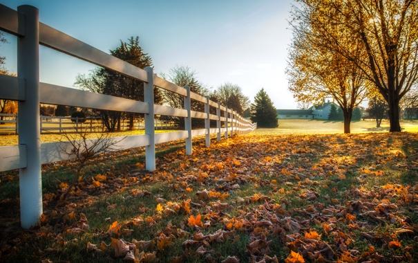 Фото обои осень, листья, забор