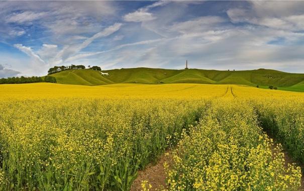 Фото обои England, горизонт, небо, облака, холмы, луг, поле