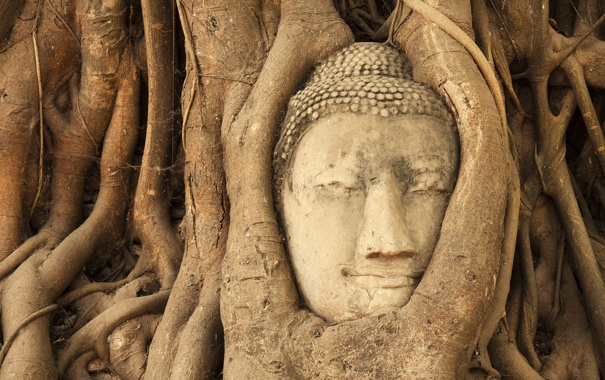 Фото обои деревья, голова, джунгли, будда, Ban Wat Tum