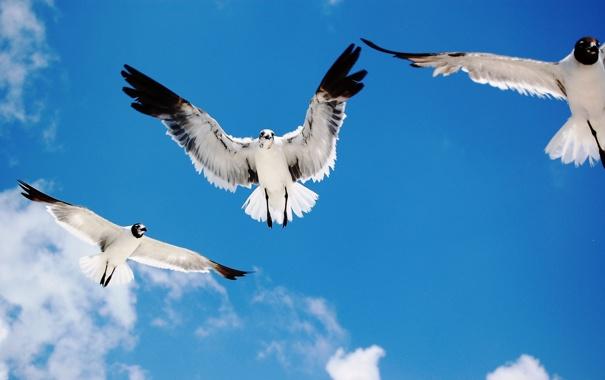 Фото обои небо, облака, чайки, морские