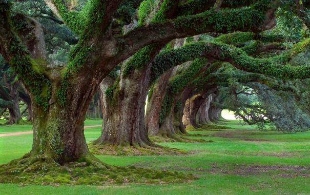 Фото обои green, grass, trees, plants