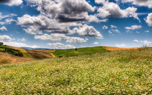Фото обои поле, небо, облака, поля, ромашки