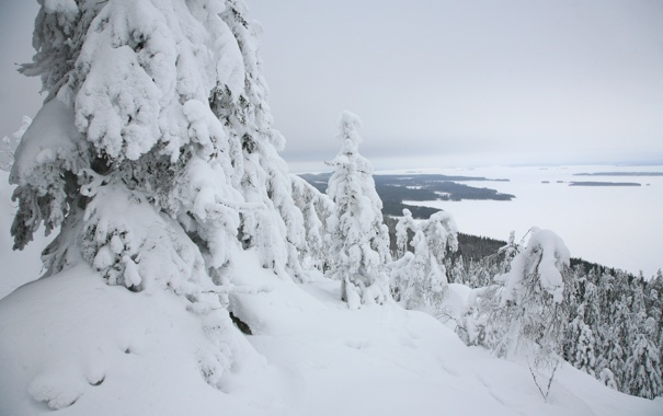 Фото обои зима, лес, горы