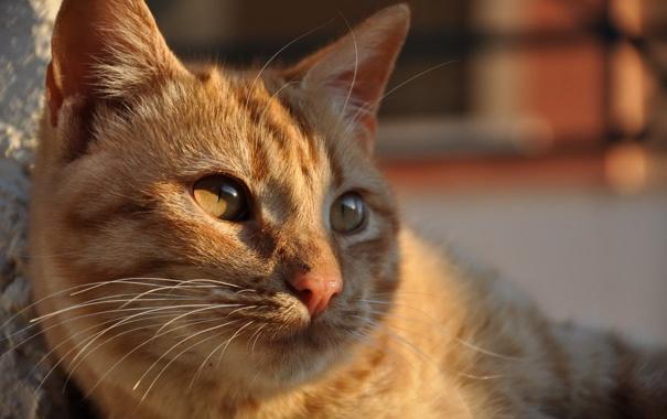 Фото обои кошка, взгляд, свет