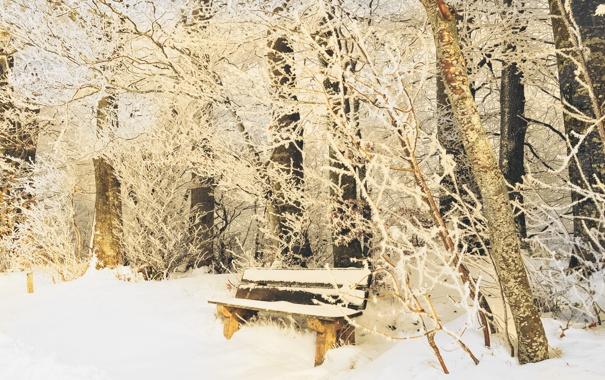 Фото обои зима, иней, снег, деревья, скамейка, ветки, природа