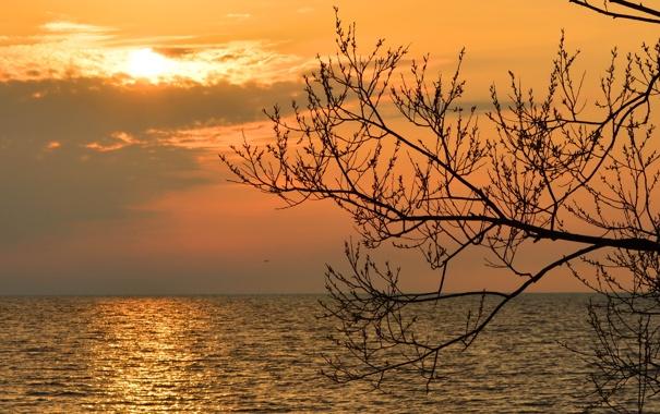 Фото обои море, небо, ветки, дерево, рассвет, горизонт, силуэт