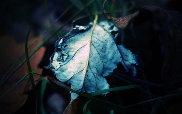 Фото обои осень, трава, макро, лист, сухой, прожилки, травинки