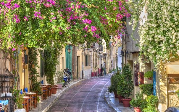 Фото обои цветы, город, весна, Greece