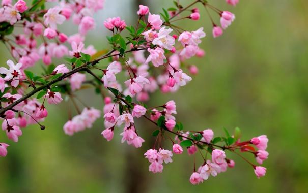 Фото обои цветы, ветка, весна, цветение