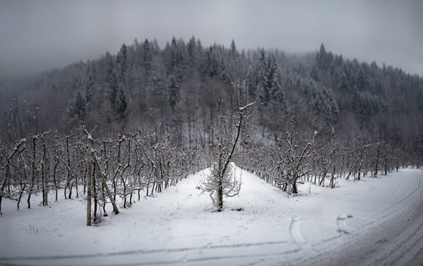 Фото обои зима, дорога, пейзаж, сад