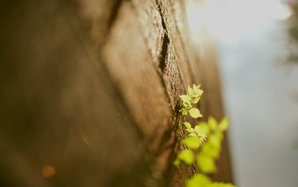 Фото обои листья, макро, стена, стены, растения