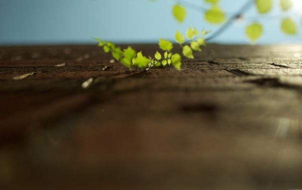Фото обои листья, макро, ветки, природа, фото, стена, стены