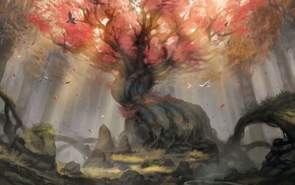 Фото обои осень, лес, листья, птицы, корни, камни, дерево