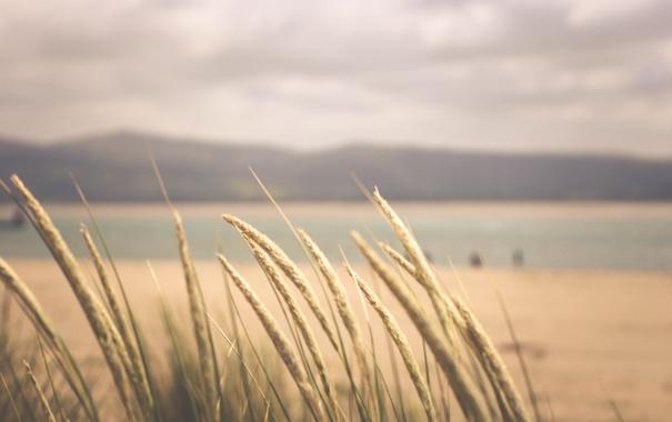 Фото обои трава, горизонт, колоски