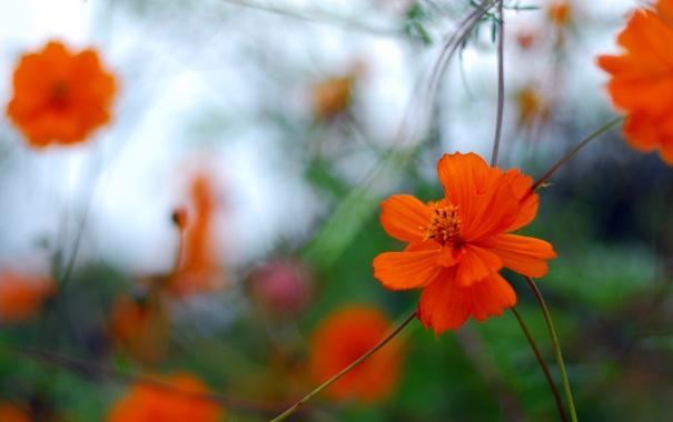 Фото обои поле, цветок, лепестки, стебель, луг